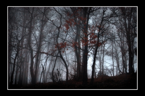 Niebla en Moncalvillo (2. Bildumarik onena -iii-)